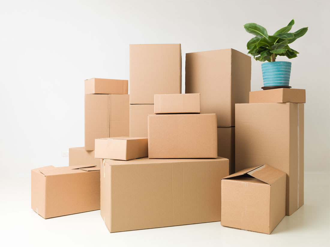 boxes, plant, cardboard